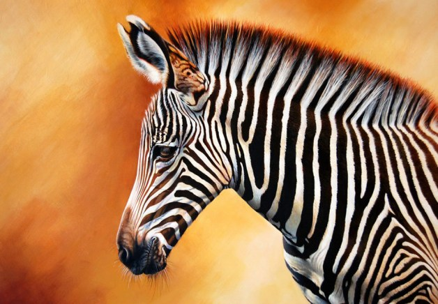 Zebra: Contrast
